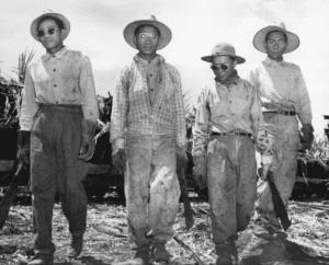 Sakadas Juan Baloran, Juan Pagoyo, Cipriano Barragado, and Julio Silga, n.d. Courtesy of Hawaiʻi State Archives.