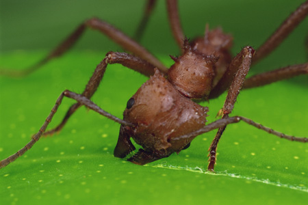 Leaf Cutter Ant (Mark Moffett/Minden Pictures)