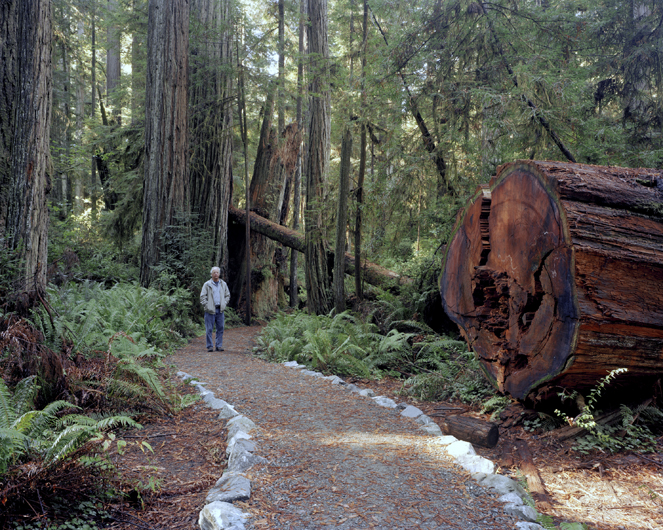 <p>Dad and old growth redwood forest. Prairie Creek Redwoods State Park, 2007.</p>
