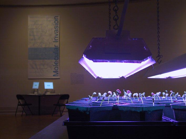 <p>Critical Art Ensemble: <em>Molecular Invasion</em></p>